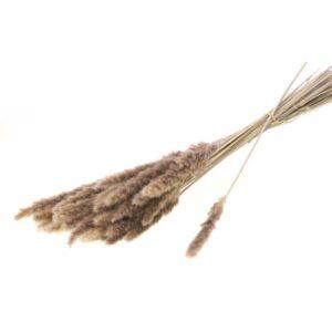 Reed grass, Natural, 70g