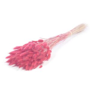 Lagurus Pink Bunch