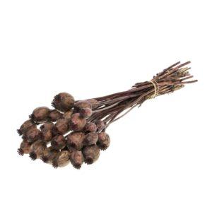 Dried Papaver (Poppy heads) Deep Brown