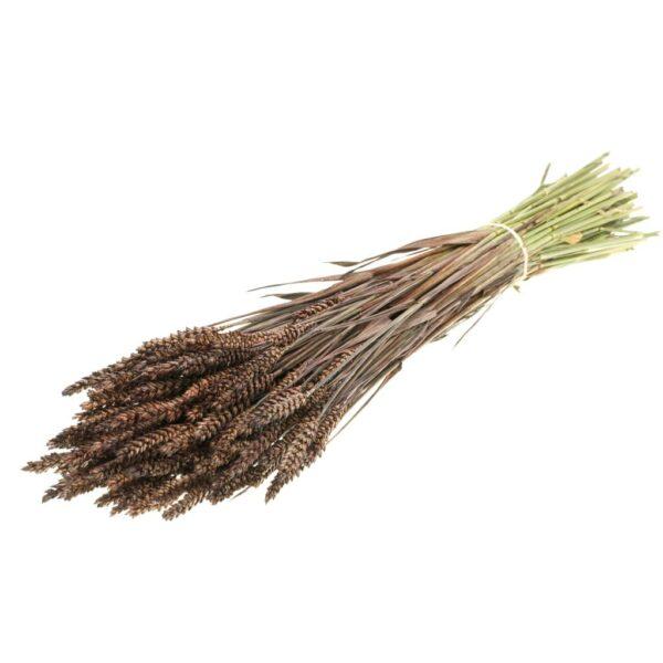 Tarwe (Wheat), Deep Brown