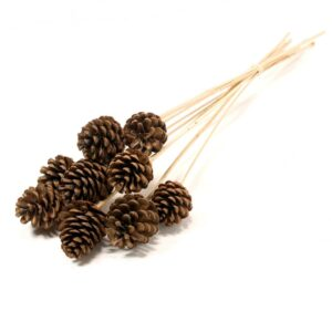 Pine Cone, Natural, 5-7cm, on Stem