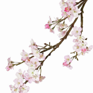 Apple Blossom Branch, Light Pink