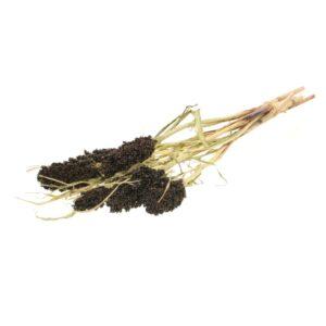 Sorghum natural brown