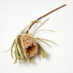 Banksia Hookerana Natural