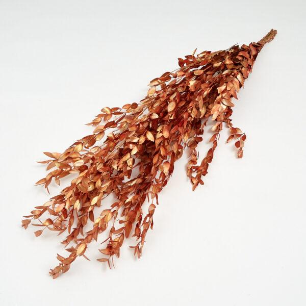 Euc Parvi Copper