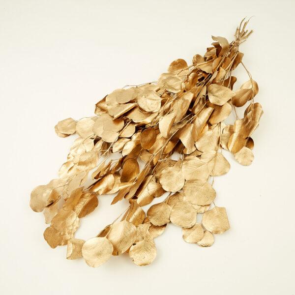 Euc Populus Gold