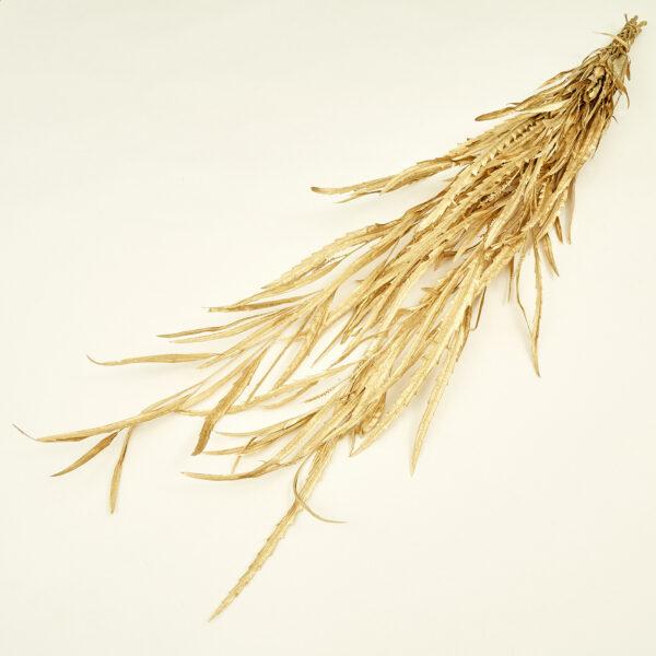 Grevillea Gold