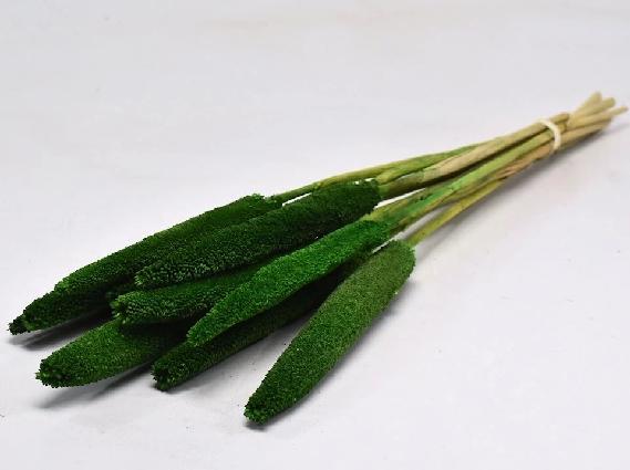 Babala Green