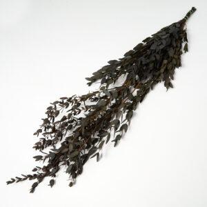 Preserved Eucalyptus Parvi Black