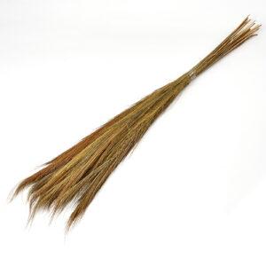 Broom Grass Bunch