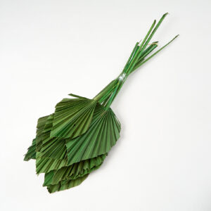 Palm Spears Apple Green