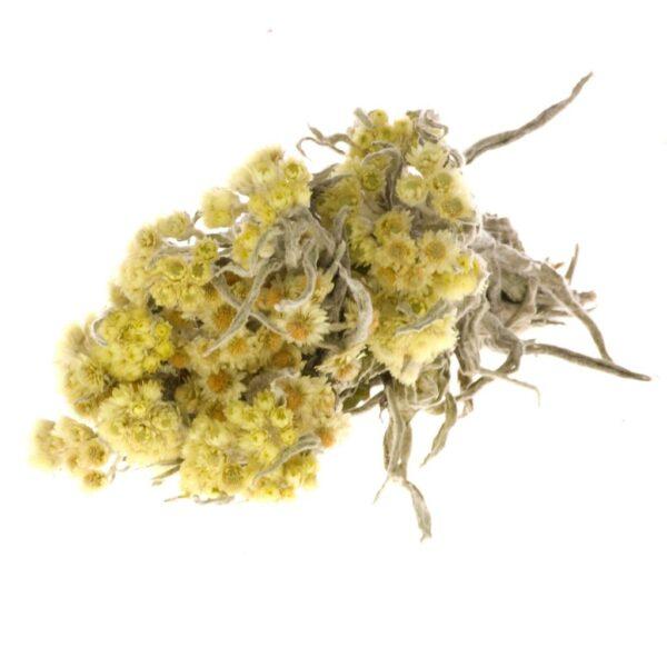 Anaphalis Natural Yellow