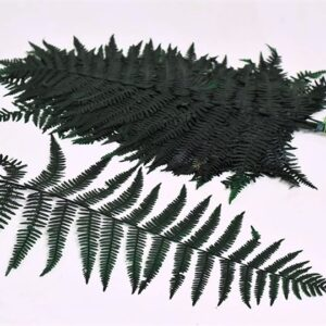 Preserved Fern, Green