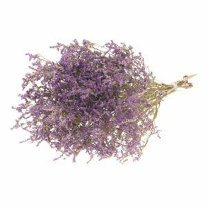 Statice Tatarica Natural Purple