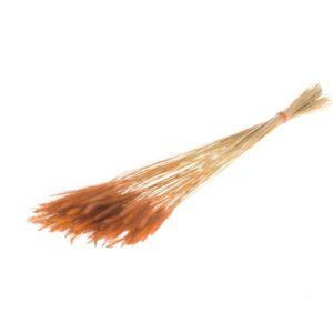Soft Pencil Grass, Soft Orange