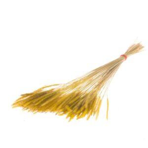 Soft Pencil Grass, Yellow