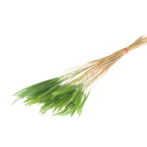 Soft Pencil Grass, Green