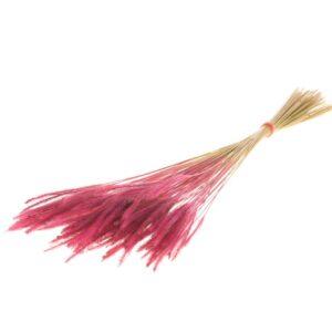 Pencil Grass Pink