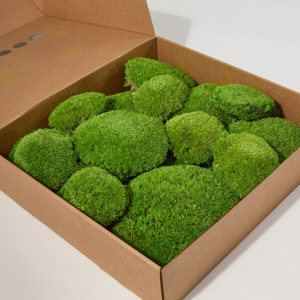 Ball Moss, Light Green, Window Box