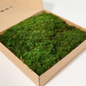 Fern Moss, Green