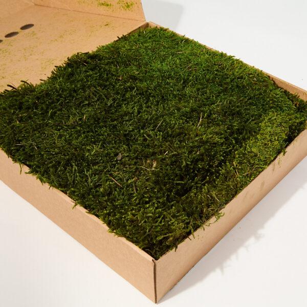 Long Moss, Green