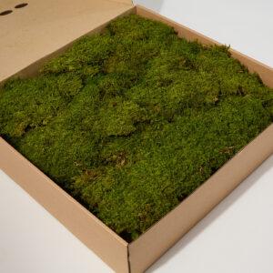 Rock Moss, Green