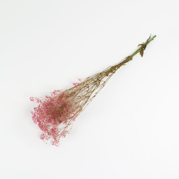 This is an image of a bunch of preserved pink gypsophila on a white background.
