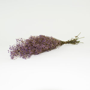 This is an image of a bunch of preserved lilac gypsophila on a white background.