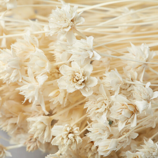 This is a bunch of Hill Flowers that have been bleached to a delicate ivory colour.
