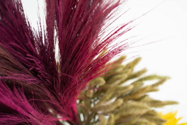 This image shows some of the deep pink broom grass contrasted against some natural green, and yellow setaria.