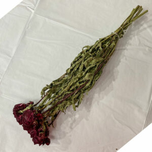 This is a bunch of five dried Faith Black Peony stems. The blooms are deep red colour resemblant of red wine.