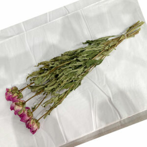 This is a bunch of five Jacormie Peony stems, laid out so you can see the delicate magenta and white blooms.