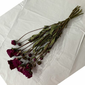 This is a bunch of Sarah Purple peony stems, The colour is a rich purple with magenta hues.