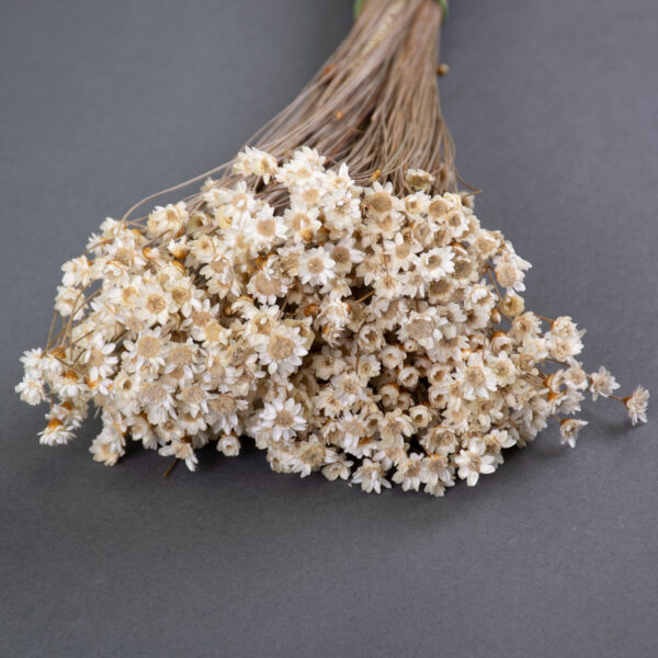 This image shows a bunch of Glixia in its natural colour. It shows a 50g bunch.