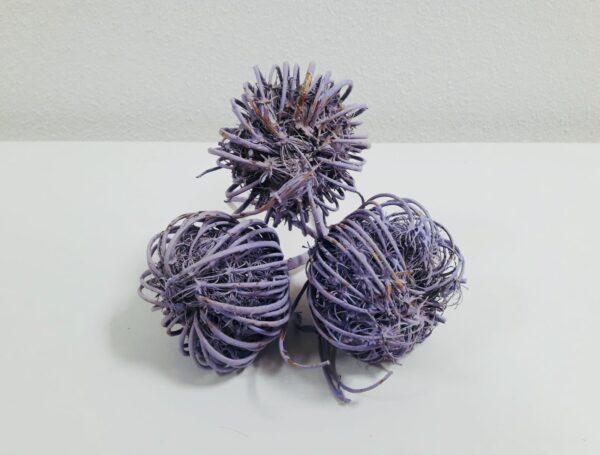 Ammi Majus Lavender Bunch