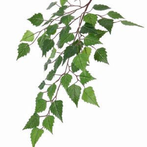 Birch Betula Green, Faux Stem