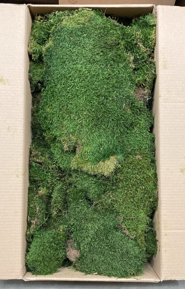 This is Preserved Green Flat Moss, shown in its Bulk Box to give an idea of scale.