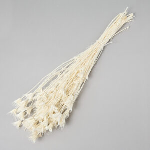 This image shows a bunch of bleached Nigella Orientalis. It is a creamy white colour, with delicate flowers on the end of spindly stems.