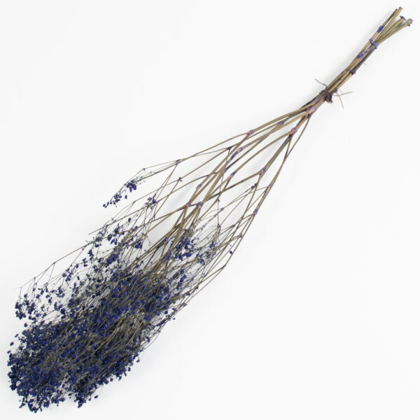This is an image of a bunch of preserved dark blue gypsophila on a white background.