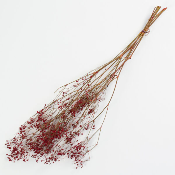 This is an image of a bunch of preserved red gypsophila on a white background.