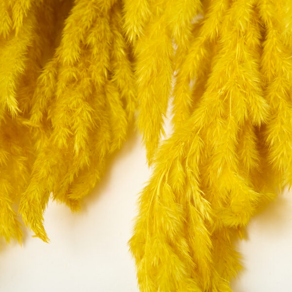 This image shows close up of a bunch of yellow Eryanthus plumes. They are 115cm tall and really stand out in this bright yellow colour.