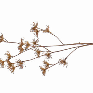 This image shows a faux Daucus Carota, or wild carrot, called Dried Nature. It is a brown, woody specimen, reminiscent of bracken.
