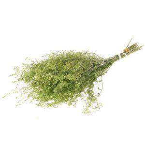 Lepidium, Fine, Natural Green, Bunch