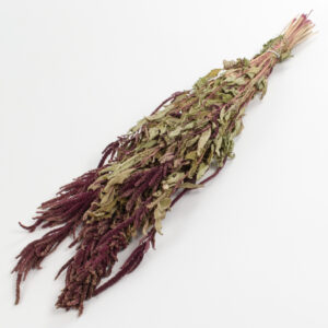 This image shows a bunch of Amaranthus Caudatus in a deep red colour, lying on a white background.