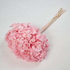 Hydrangea, Antique Pink, Bunch