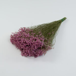 This image shows a large bunch of pink Limonium laid on a white background.