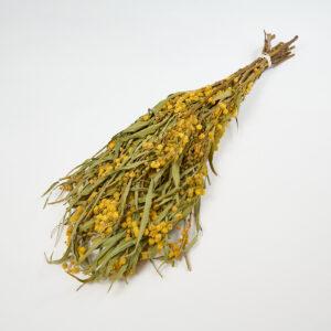 Mimosa Bunch Natural Yellow