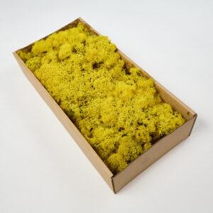 Reindeer Moss Yellow