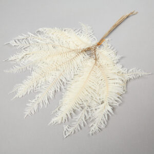 Coral Leaf, Bleached, Bunch