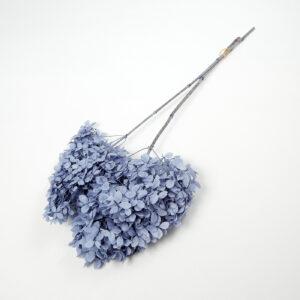Hydrangea Pani Blue Bunch